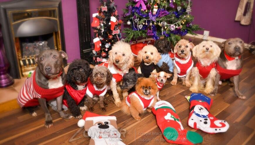 24 Best Christmas Dinner Recipes for Dogs to Celebrate ... |Christmas Vacation Dog Dinner